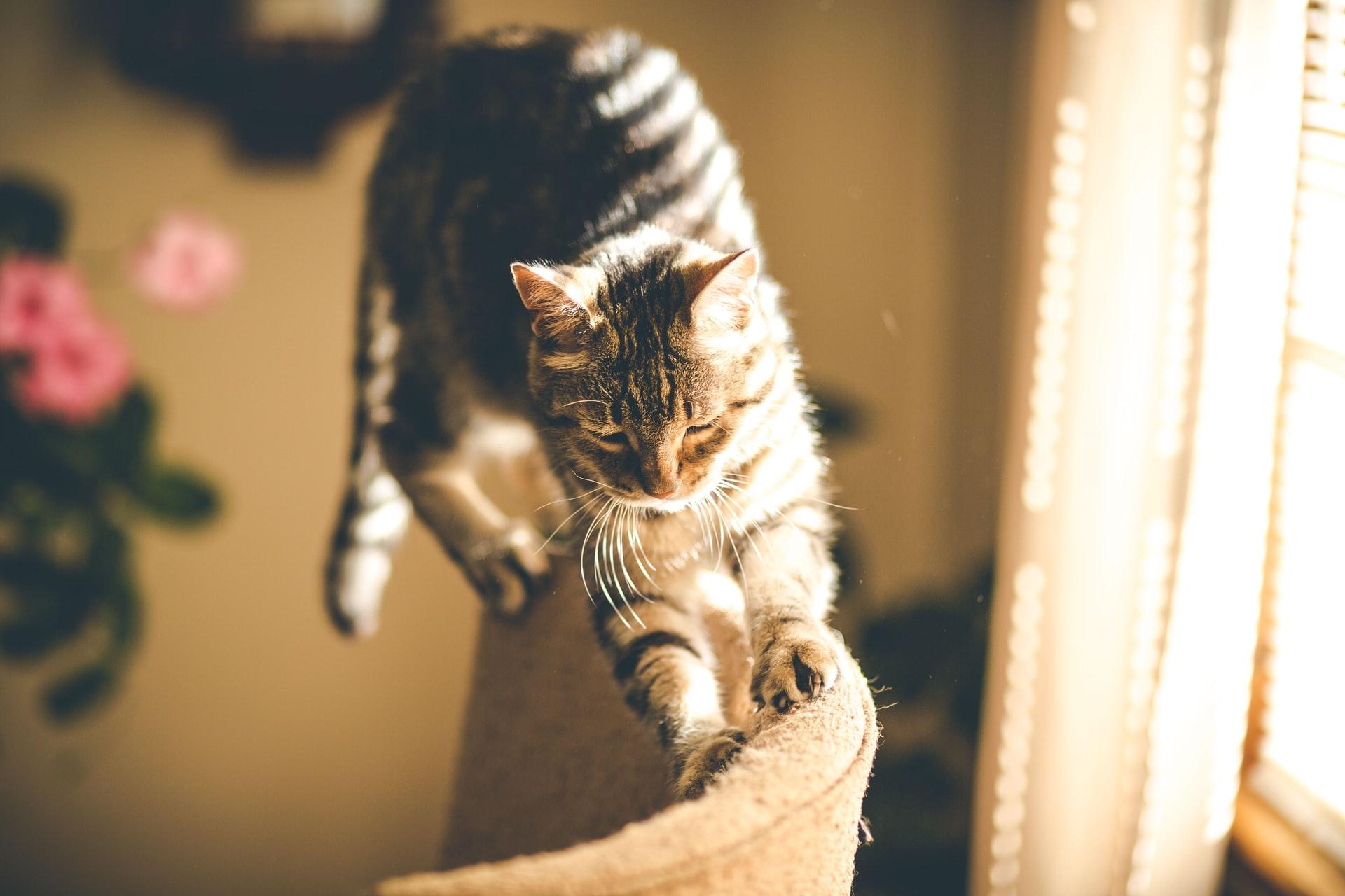 Chat qui griffe un canapé