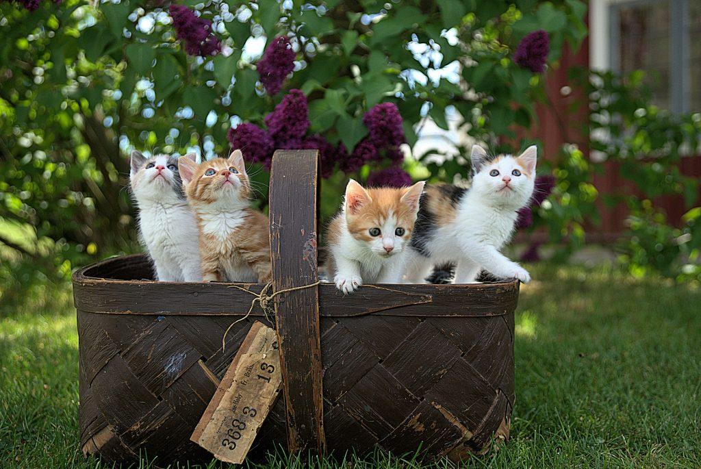 Panier avec des chatons